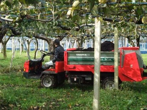 実りの秋のために堆肥を撒いています〜美味しい梨を願って〜